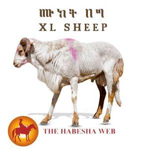 Extra Large Sheep